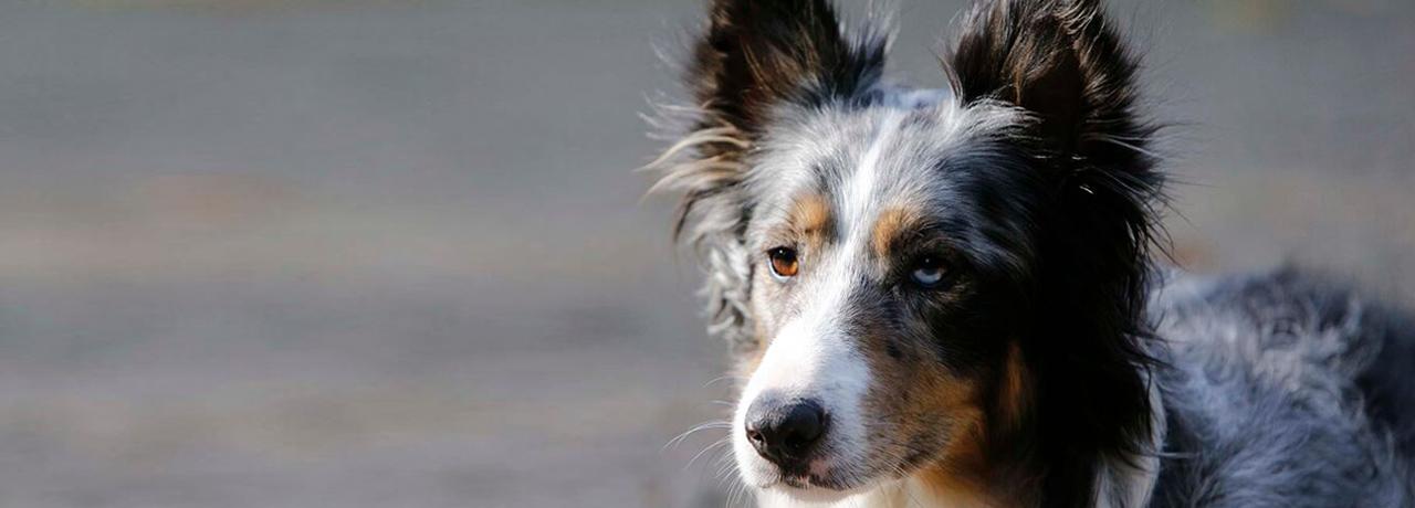 Hundeschule Einzelberatung