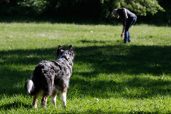Gegenstandssuche Hundeschule