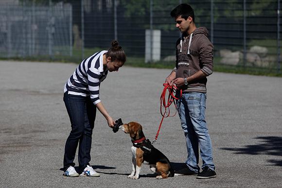 Mantrailing Hundeschule Hamburg
