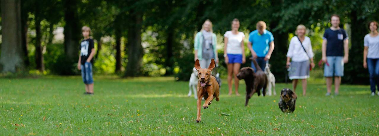 Spielgruppe Hundeschule Hamburg