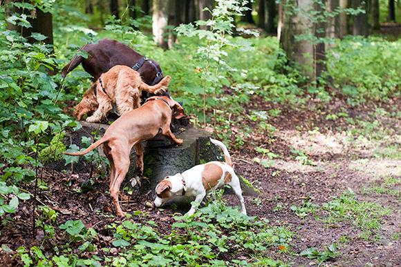 Spielgruppe für Hunde Hamburg