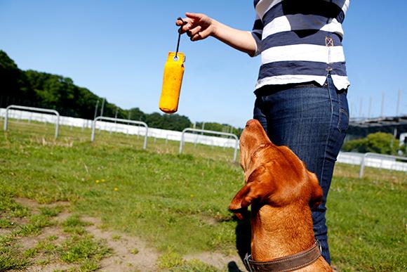 Apportieren Hundeschule Hamburg