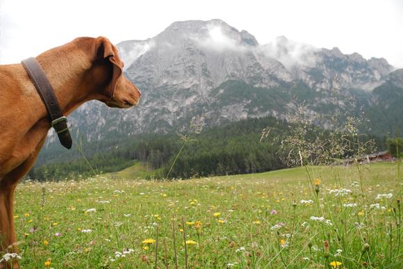 Hansehund Hundeschule Alpentour