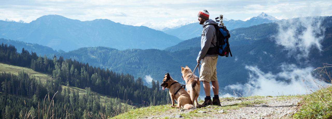 Hansehund Hundeschule Alpen Hundetour