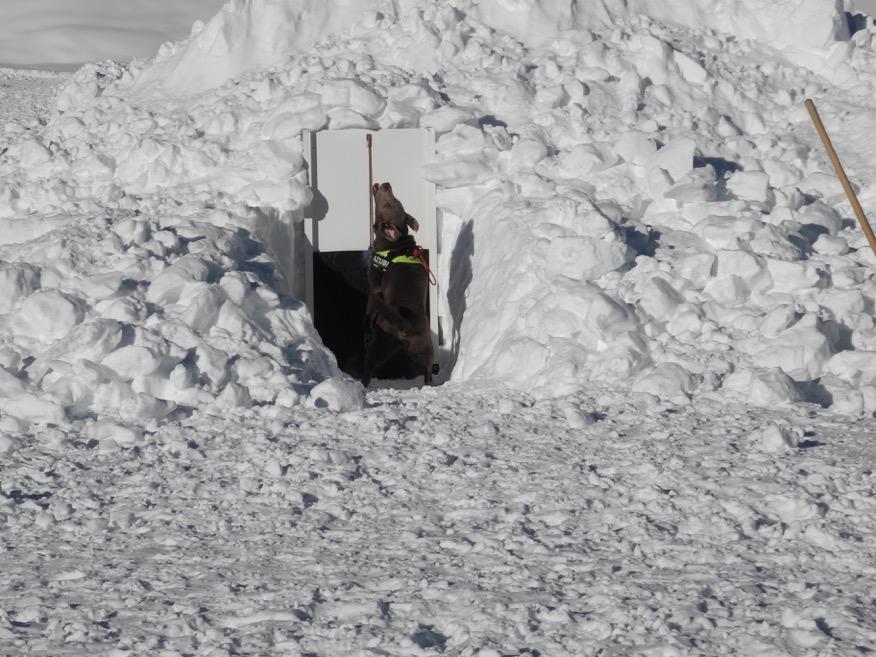 Hund im Schneeloch